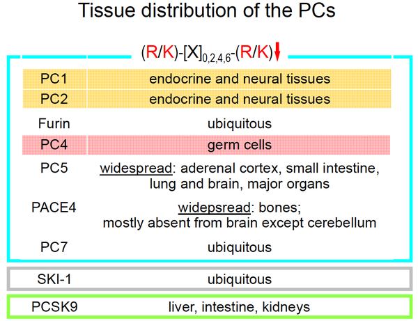 2_ Tissue distribution of the PCs