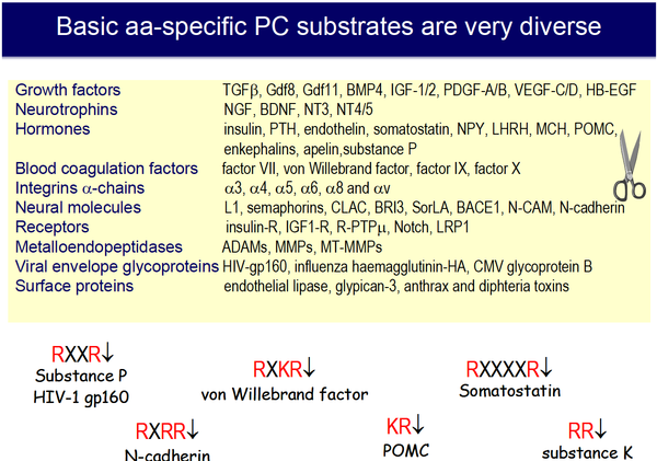 Figure 4_ Diversity of the substrates of the basic aa-specific PCs
